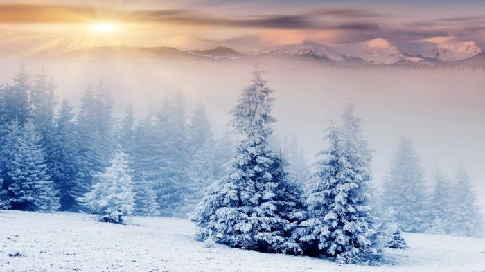 Alberi tra le nevi e la montagna