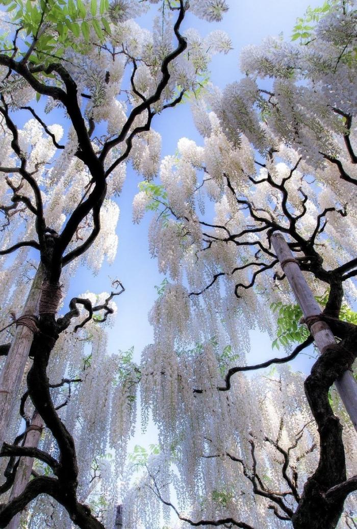 Albero in fiore bianco