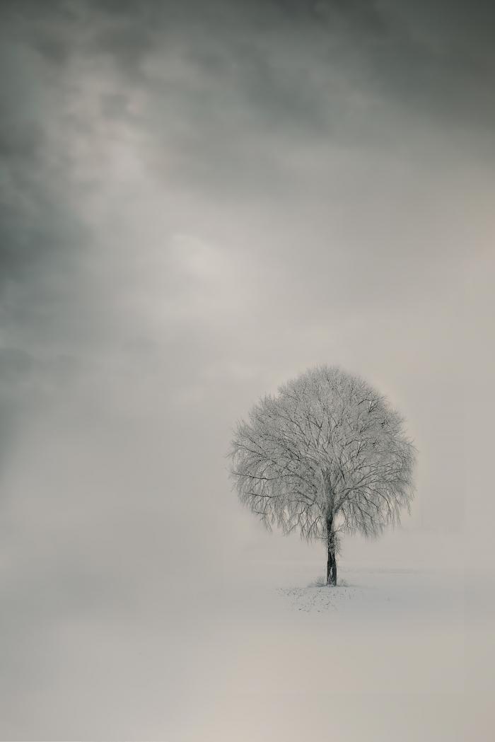Albero senza foglie tra le nevi
