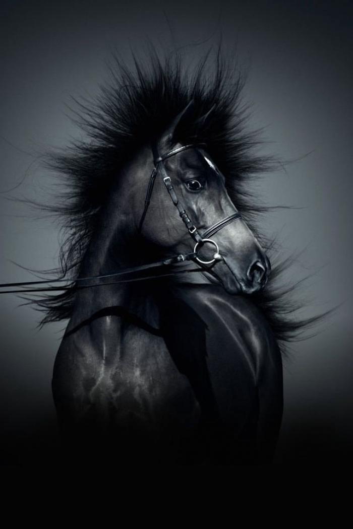 Black Horse per iPhone