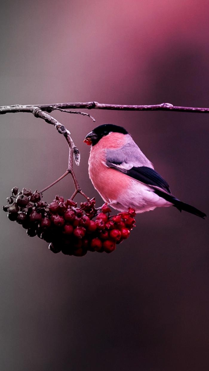 Colored Winter Bird
