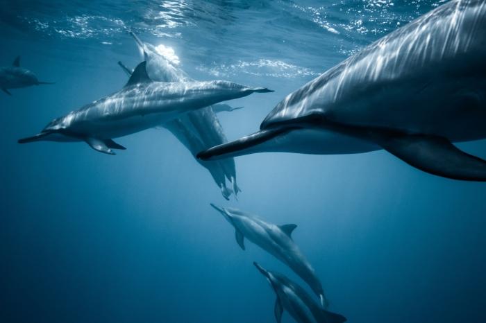 Delfini nel mare blu