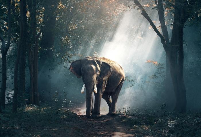 Elefante nella Foresta