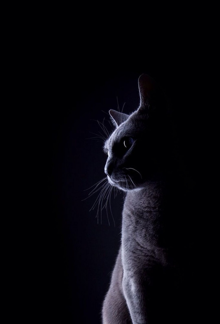 Gatto Nero Adorabile