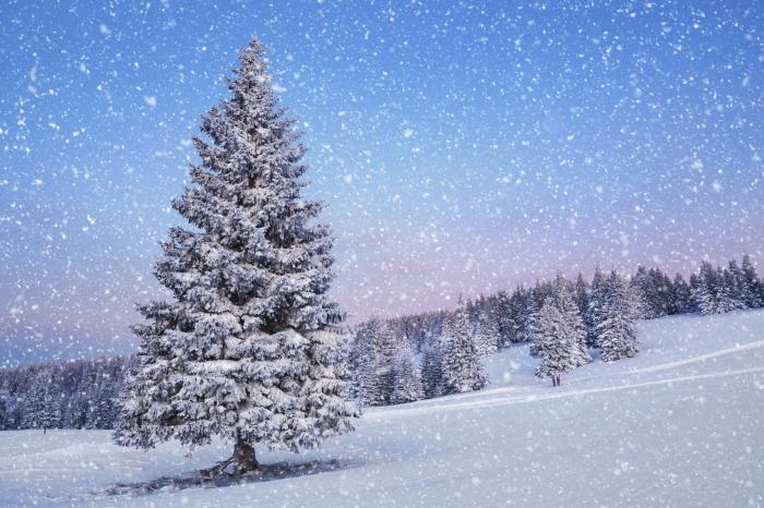 Inverno e la neve