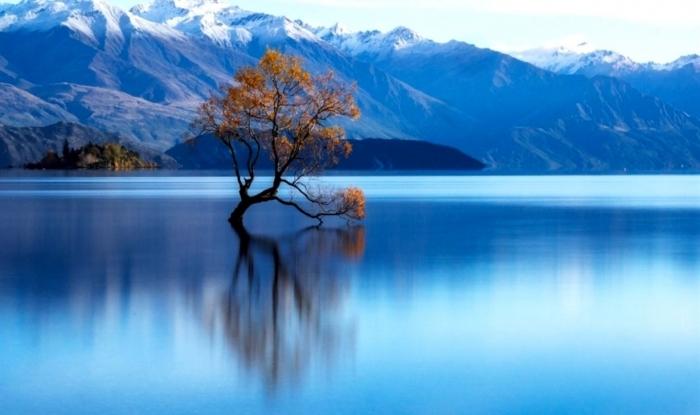 L'albero nel lago