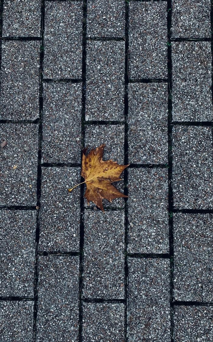 La foglia d'autunno