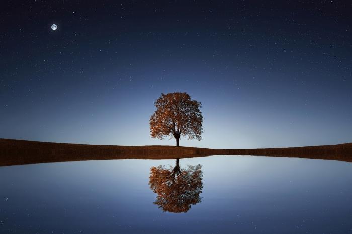 La solitudine dell'albero