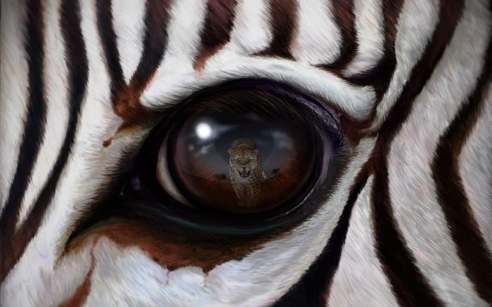 Riflesso nel Occhio di Zebra 4k