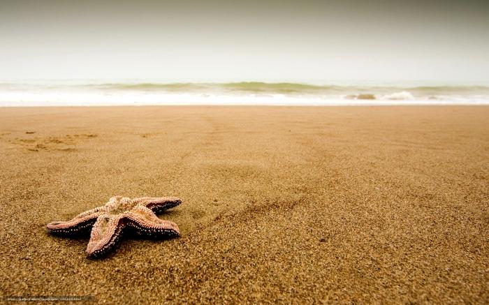 Stella Marina sulla sabbia