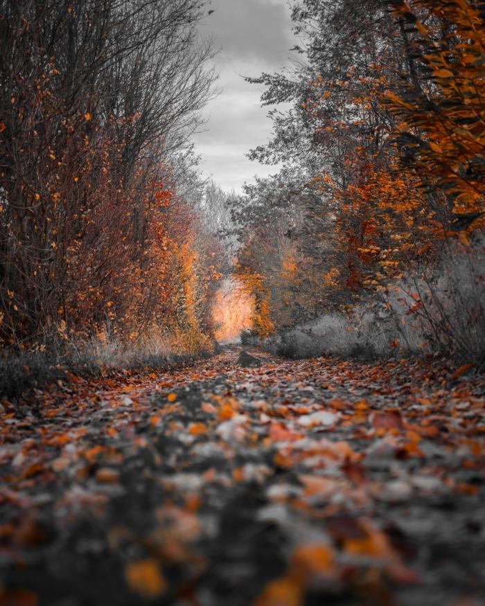 Strada tra gli alberi autunno