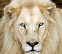 15 Animali Albini in fotografie strab...