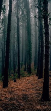 Alberi nel bosco d'autunno