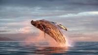 Il tuffo della balena